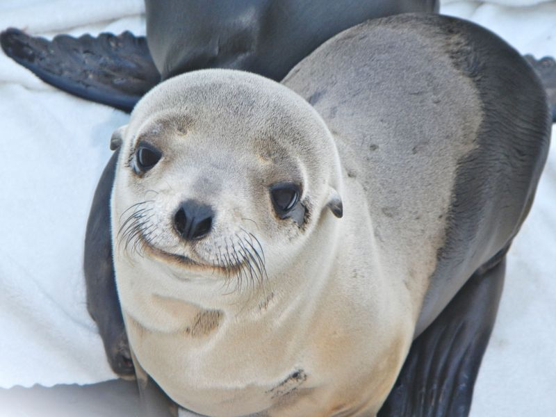 Marine Mammal Care Center sea lion